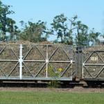 Le petit train chargé de cannes à sucre