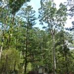 La forêt humide de Fraiser Island