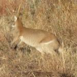 Un kangourou salue notre passage
