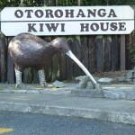 Impossible de passer en Nouvelle Zélande sans rencontrer le Kiwi