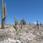 Le désert de Huamauhaca
