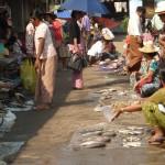 Un marché en plein air avec au menu du poisson frais