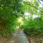 Le sentier de randonnée nous emmène dans la forêt luxuriante