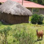 Une maison traditionnelle avec son lama