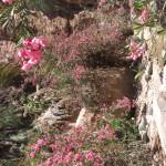 Au milieu du canyon et des lauriers roses