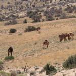 Les paysages désertique de Jordanie