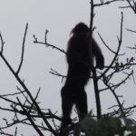 Un autre singe