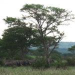Les éléphants nous accompagnent à la sortie du parc