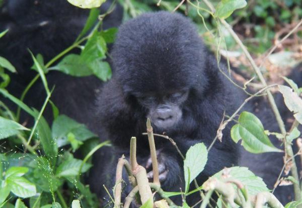L'Ouganda, un pays à découvrir