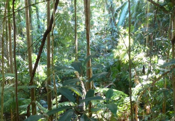 Au pays de la forêt humide et des cannes à sucre