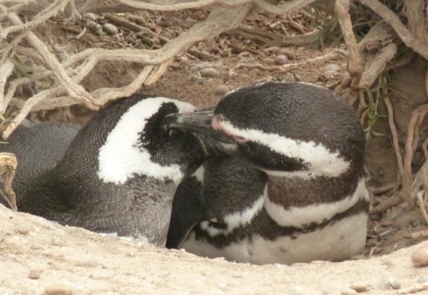 Bienvenue dans la cité des pingouins