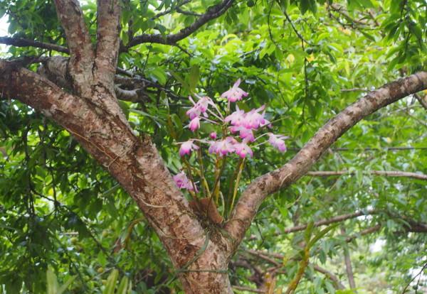 Des Daos au Hmongs fleuris