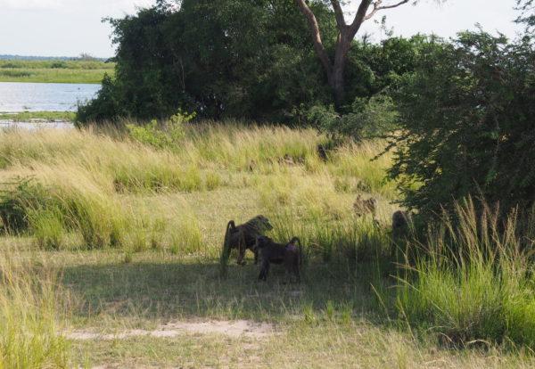 Petites anecdotes d'Ouganda