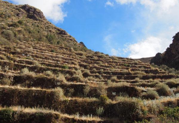 Dans les traces des incas