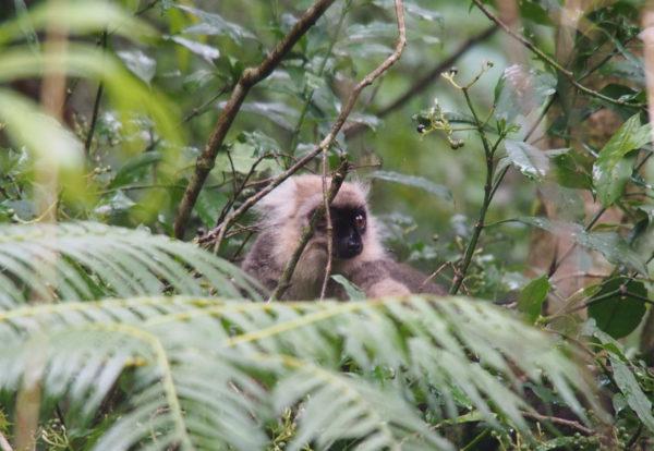 Dans la montagne d'Ambre, à la recherche des lémuriens