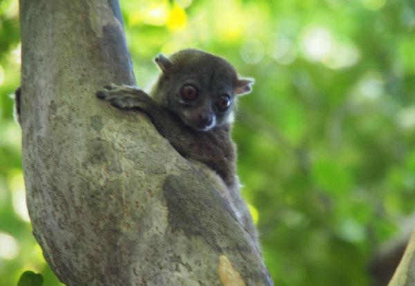 Madagascar, le joyau de l'océan indien