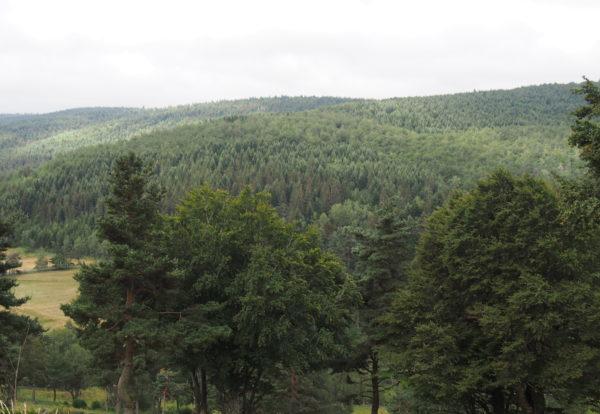 Une belle étape entre montagne et forêt