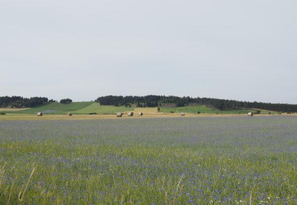Dernier jour dans la Loire
